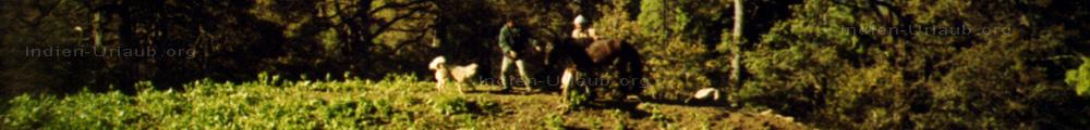 Indien Reiseberichte. Hier auf dem Panoramabild als wir gerade den Esel f�r das Trekking in Indien beladen.