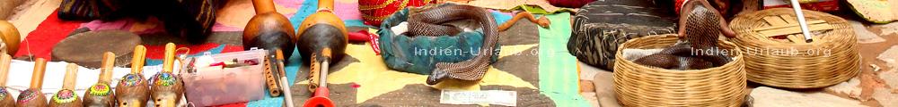 Schlangen von den Schlangenbeschwoerern bei der Rundreise durch Indien.