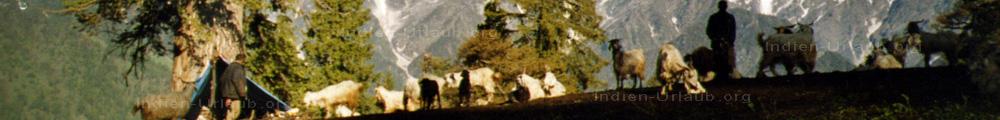Trekking in Nordindien. Zusammen mit indischen Sch�fern im Himalaja uebernachtet haben wir einfach unter der blauen Plane, die wir neben dem Baum befestigt hatten.