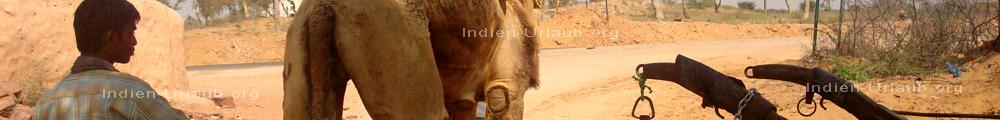 Wuestensand, Kamele, Hirten, eine eindrucksvolle Wuestenstadt, das machen die Reisen nach Jaisalmer aus, heiss, trocken und staubig.